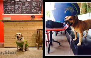 6 Pet-friendly Cafes Around the City