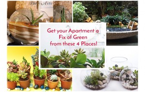 Get Your Apartment a Fix of Green from these 4 Places