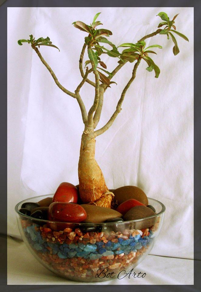 Miniature Ornamental Gardens by BOT ARTO