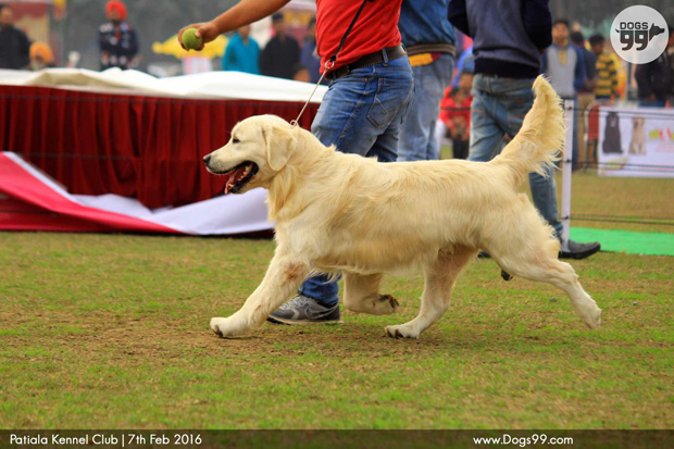 DOG SHOW by the Ahmedabad Canine Club