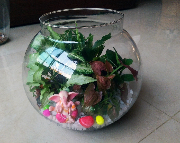 Stay Close to Nature even Indoors with Leah's Terrariums!