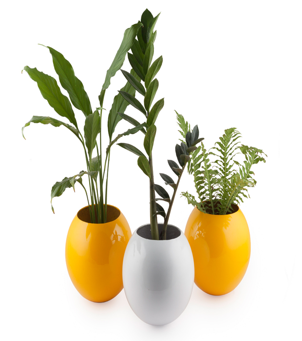 Pretty Planters to Perk Up Your Paradise Just at Rs 150!
