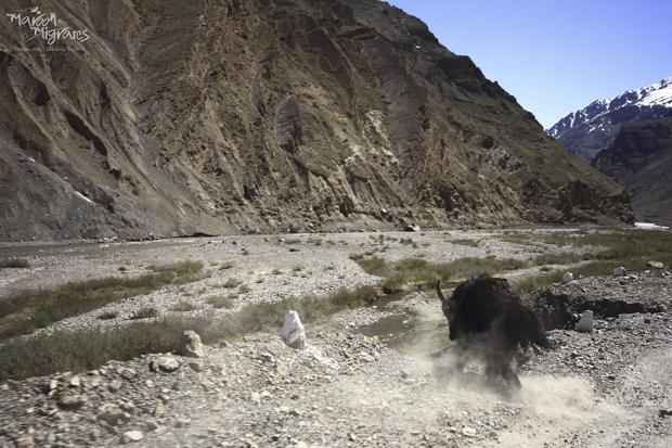 Maroon Migrates's Spiti Valley trip