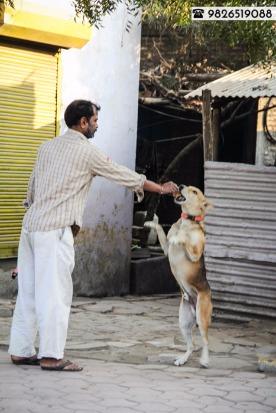 Buy a dog collar, save a life!