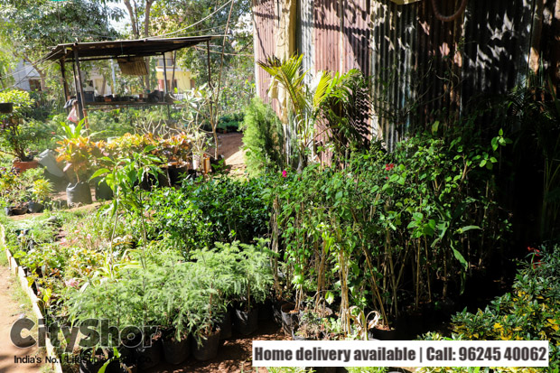 Revamp your living spaces with plants from keshav Nursery