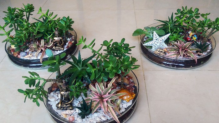 Decorate Your Home With these Eco-friendly Miniature Garden