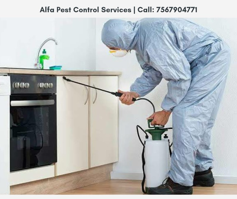 Sanitise your homes | Call Alfa pest control services