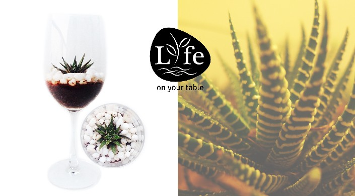 Go Green with Miniature 'Life On Your Table' Plants