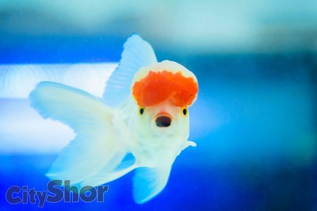 Largest rare fish aquarium in puneri festival for Rare aquarium fish