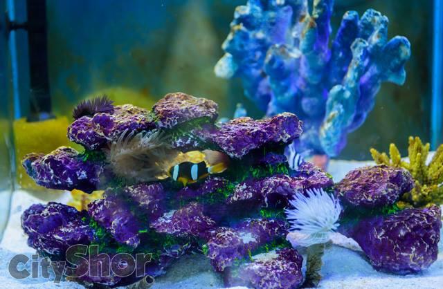 Largest Rare Fish Aquarium in Puneri Festival!