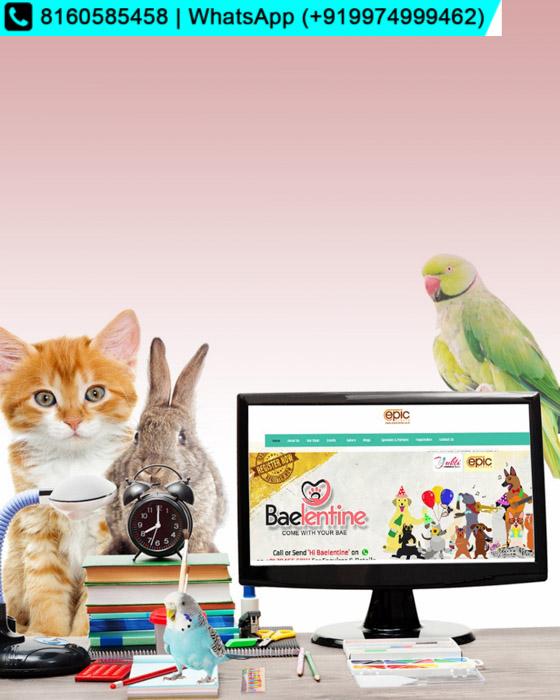 Baelentine   Pets Valentine Day