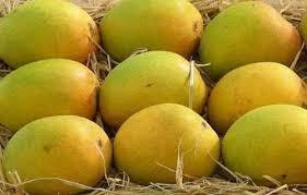 Get fresh Mangoes home delivered