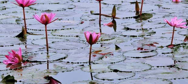 Indulge in beauty and nature this Sunday at Gavier Lake.