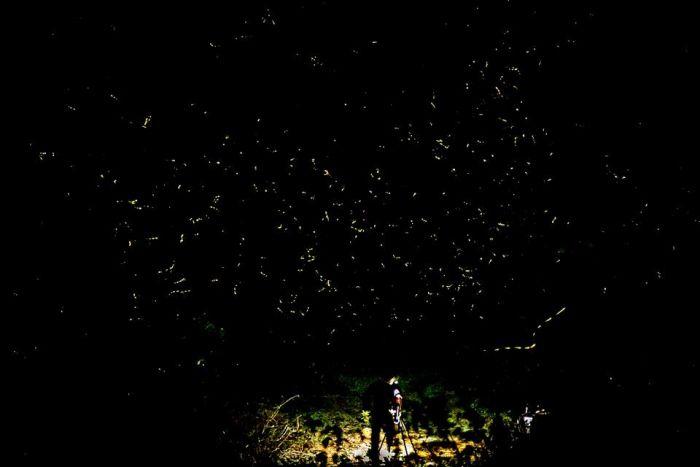 Witness the Dance of a Million Fireflies at Purushwadi!