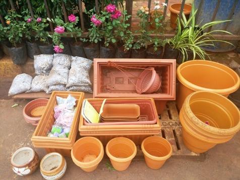 Get a Variety of Plants at Rock Bottom Prices in Santacruz!