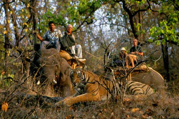 Call of the Bandhavgarh Jungle with Mountain Hikers