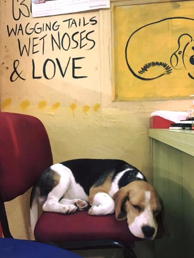 This Petting Centre Lets you Pet Dogs for just Rs 200!