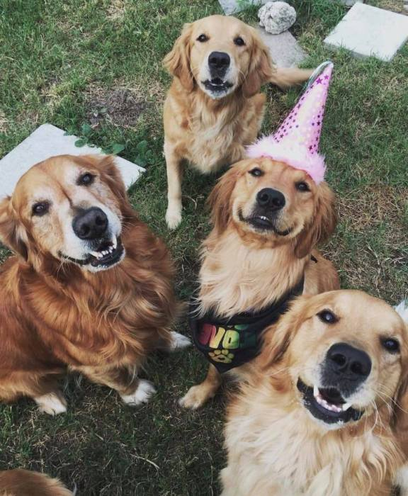 Take your Furry Friends to Pupper Party this Sunday!