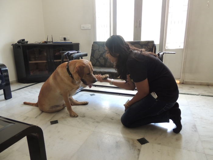 Learn Dog Training In Pune