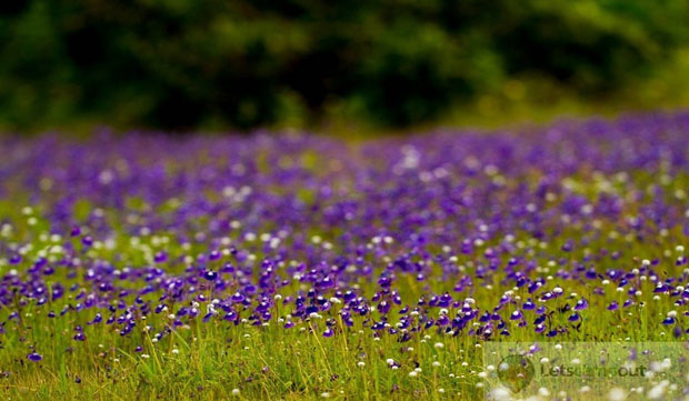 Make A Trip To The Valley Of Flowers Few Hours From Surat!