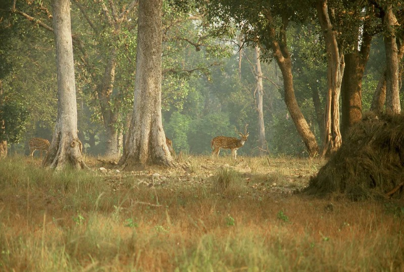 Lose & Find Yourself with the Mighty Wildlife of Kanha!