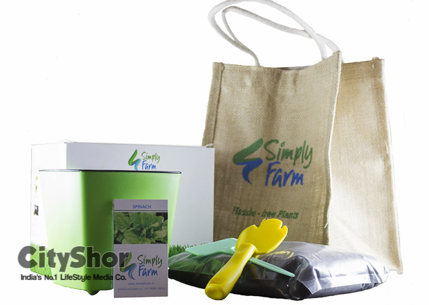 Fulfill Your green decor goals at Simply Farm!