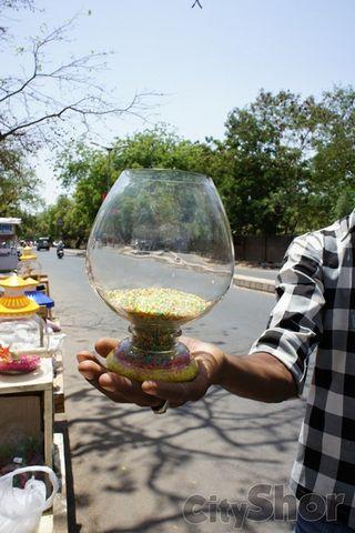 Roadside Aquarium Store Ahmedabad