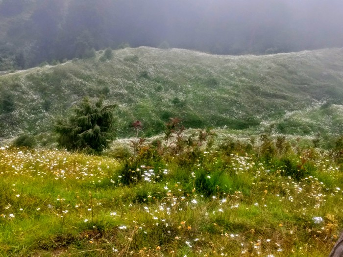 The Valley of Flowers at Dalhousie Calls You this Weekend!