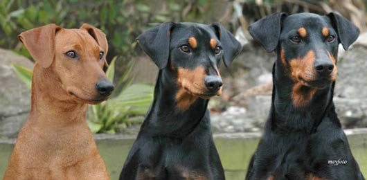 DOG SHOW by The Kennel Club Of India.
