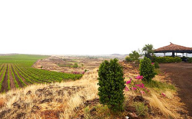 This Diwali, Enjoy a Vacay at this Splendid Vineyard!