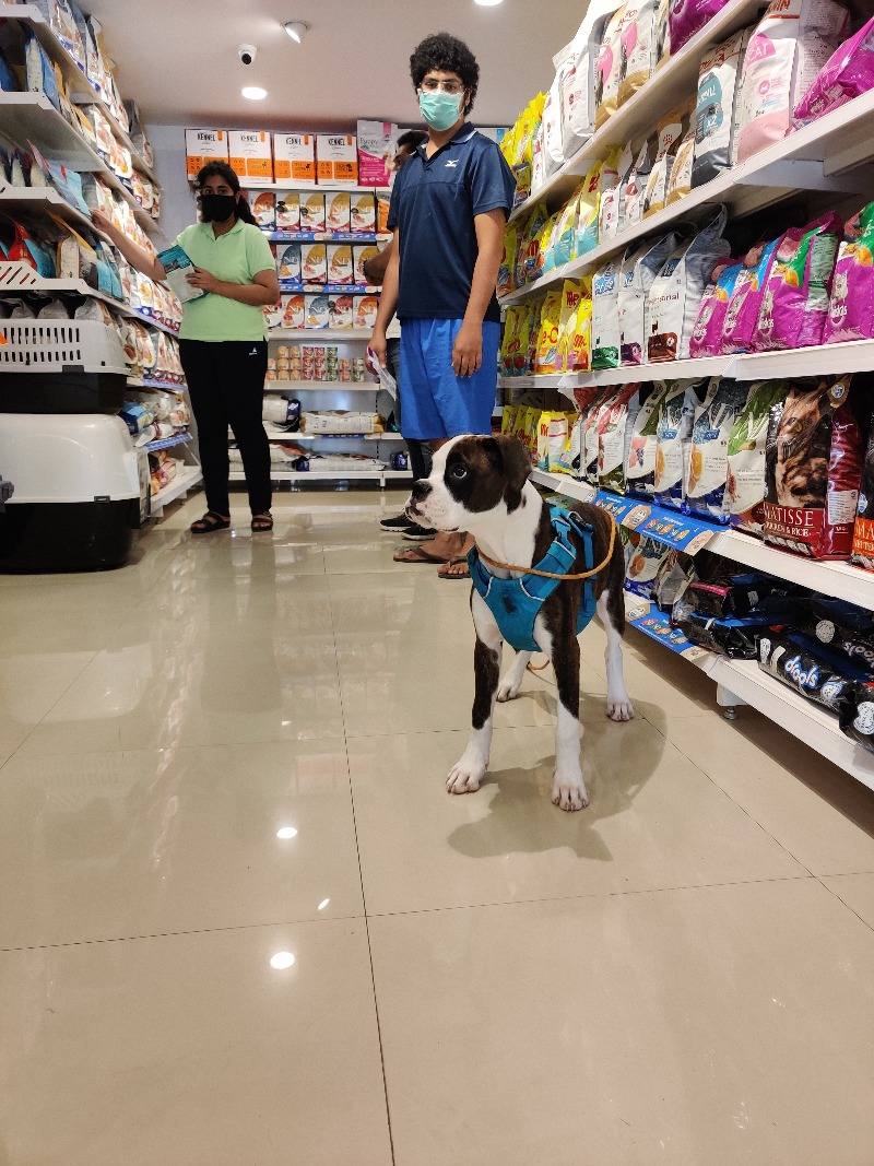 Bubble spa & more for your Pets at Just Dogs