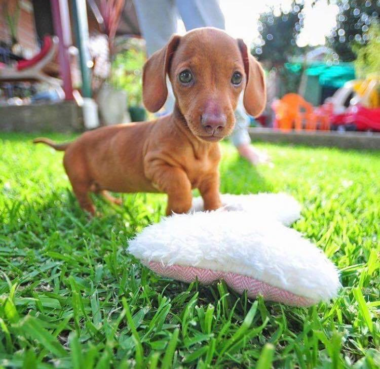 Give Your Poochies a Day Out at the Dog Fest Tomorrow!