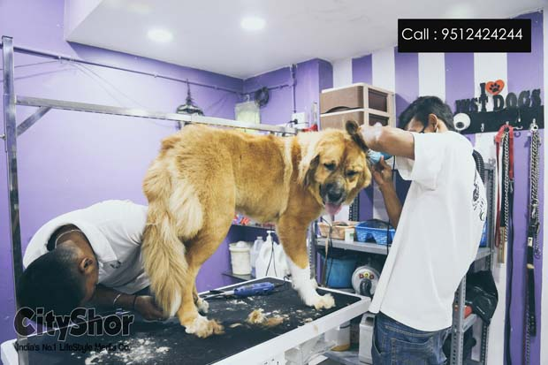 A Pawsome Grooming Session Awaits Your Pet At Just Dogs!