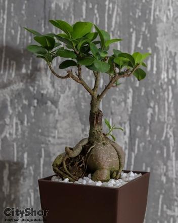 Flat 30% OFF on plants till 13th Nov at Vrundavan Nursery