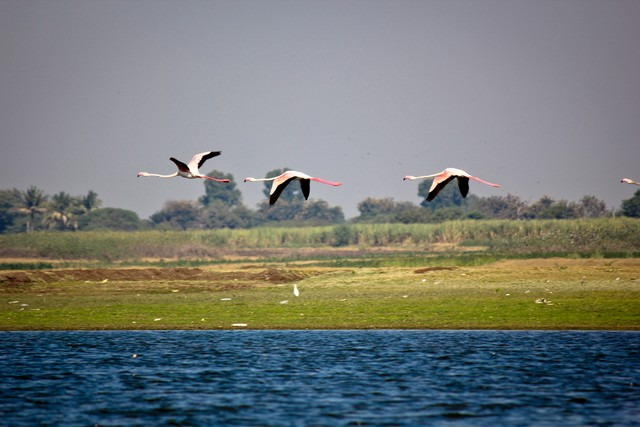A Day with Flamingos and Chinkaras - by The Western Routes !