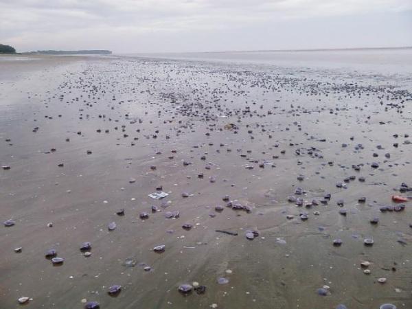 Chandipur Beach - Where sea water disappears!