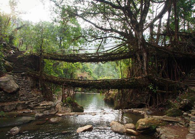 The Living Tree Bridges of Meghalaya
