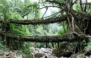 Bridges of Meghalaya